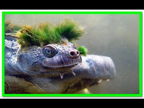 10 WEIRDEST TURTLES IN THE WORLD