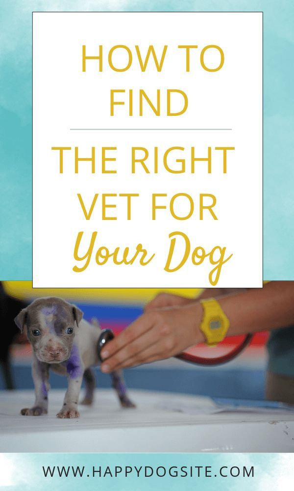 Find Out 6 Easy Ways To Find The Right Vet For Your Dog Vet