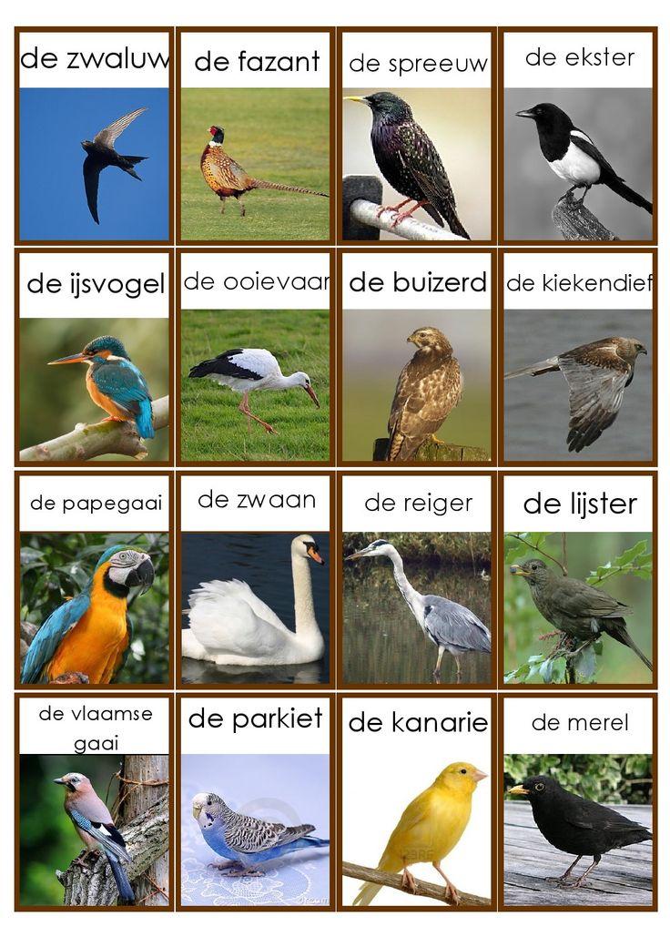 vogels 2