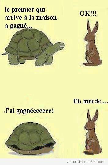 La tortue gagnerait-elle tout le temps face au lapin ? Au premier à la maison, le lapin s'est fait avoir ! Il y a des paris perdus d'avance !