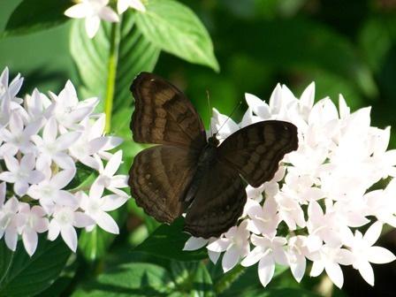 Photo Walk 2   Callaway Butterfly Garden, Georgia ~ Planet Weidknecht