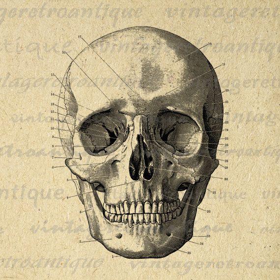Vintage Skulls 105