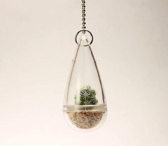 92 Best Images About Terrarium ( Mini Cactus Gardens ) On