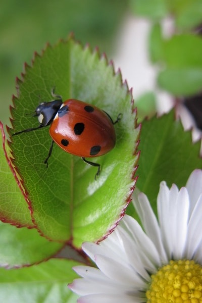 these little things always make me happy...a few people do too but every ladybird manages it every time! if i die im coming back as one...you will have the bestest   garden i promise!