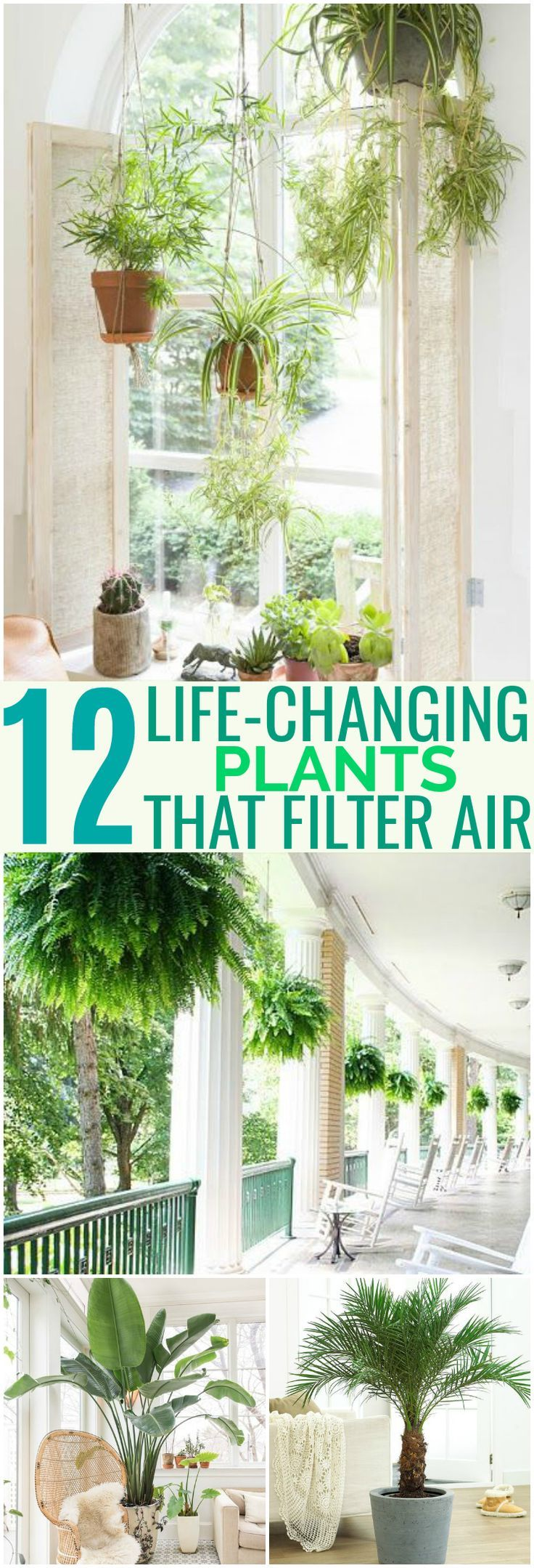 These 12 Air Filtering Plants Are Great For Homes With Cats As Pets! They aren't lethal if ingested and are also scientifically proven to clean your air!