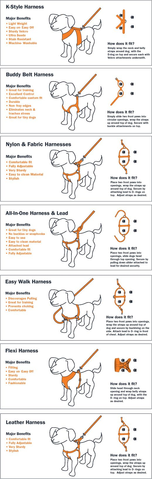 DOG TRAINING TIPS 34
