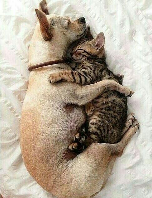 Love at first nap Dog and cat do not go together? **Pes a kočka, že nejdou k sobě?**