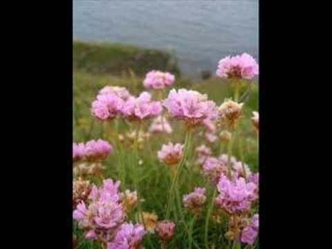 Irwin Goodman - Maailma on kaunis