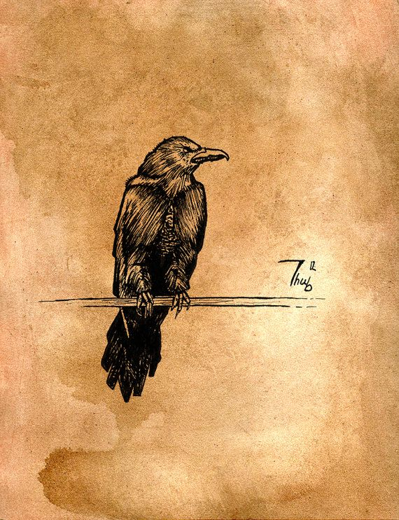 Raven drawing, orange - instant download, traditional artwork by Thubakabra, black bird, crow illustration, raven illustration, home decor