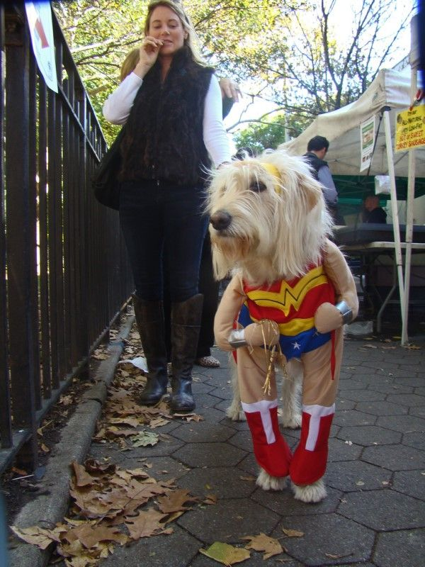 halloween costumes for pet and owner - Dog Halloween Ideas