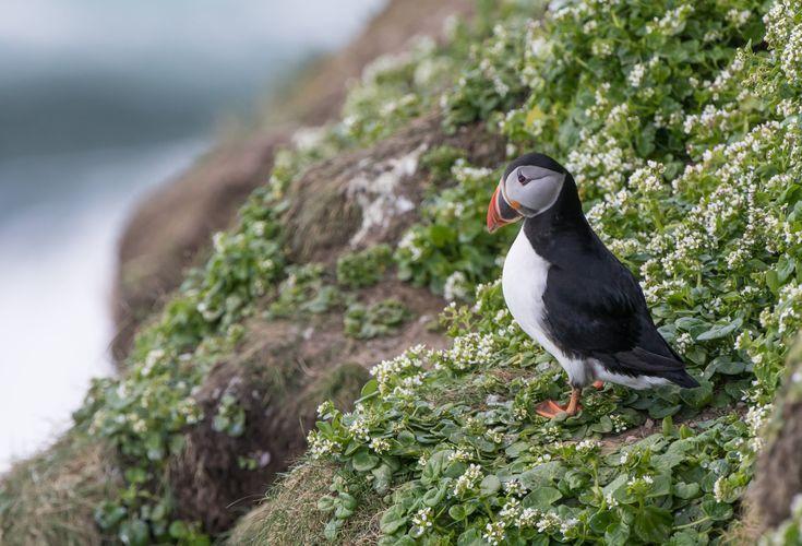 Cerchi cose da vedere e da fare nelle Isole Orcadi scozzesi quest'estate? Dai un'occhiata…