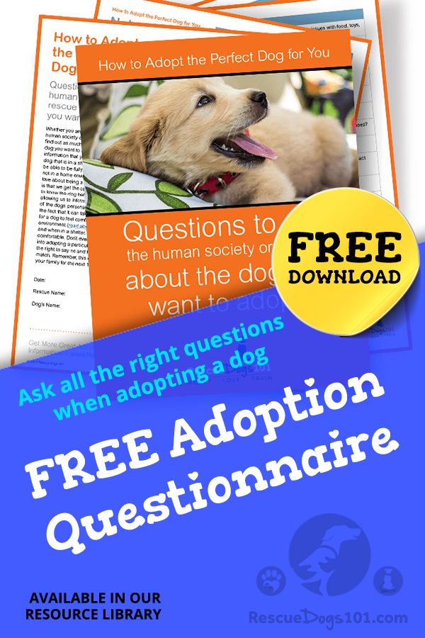 Free Resource Library For You And Your Dog Dog Care Tips The