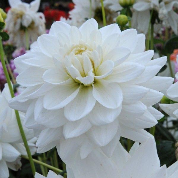 71 best Weiß images on Pinterest   Blumenschmuck, Blumenvasen und ...