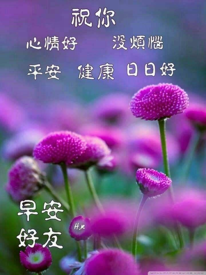 Morning Greeting Image By Bee On Chinese Quotes  Morning -9232