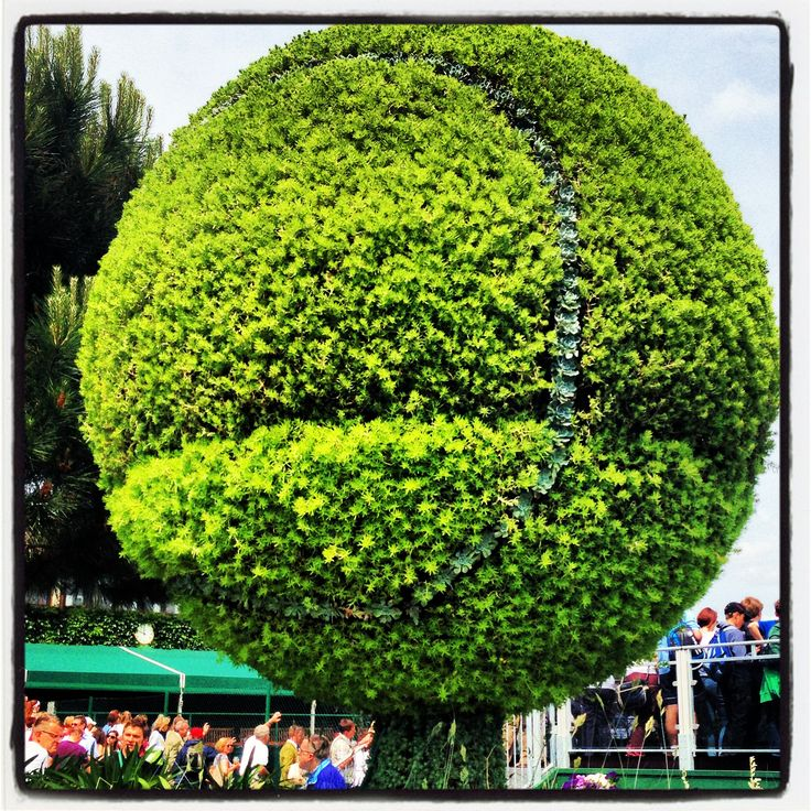 #tennisball #topiary #bush #wimbledon2013