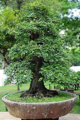 Bonsai... This is just AMAZING
