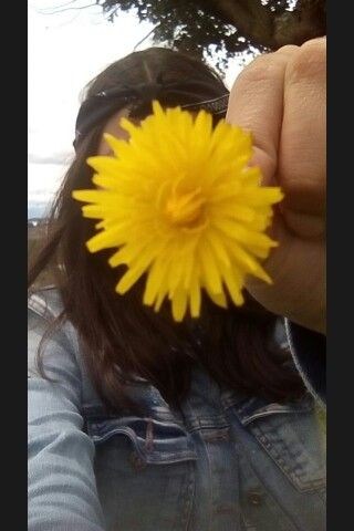 #flor  cada pétalo que pierdo  es como una puñalada 🌻