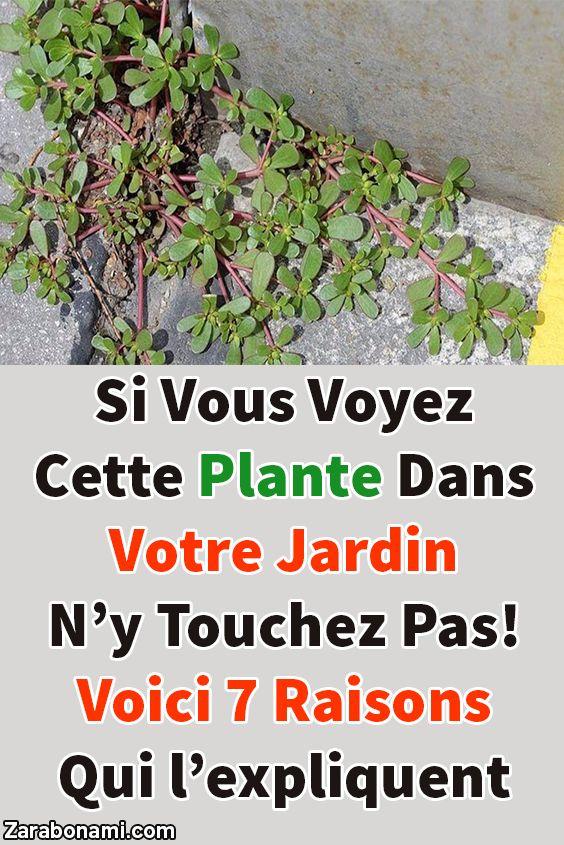 Si vous voyez cette plante dans votre jardin n'y touchez pas! Voici 7 raisons qui l'expliquent