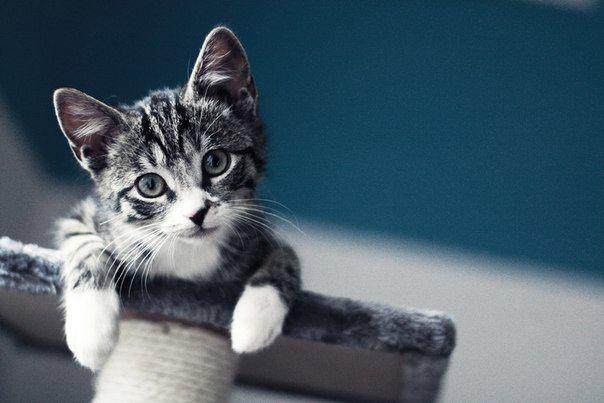 Фото 10578, альбом Фото группы - 11868 фото | Фотографии Без кота и жизнь не та!.