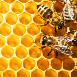 How to Build a Homemade Honey Extractor