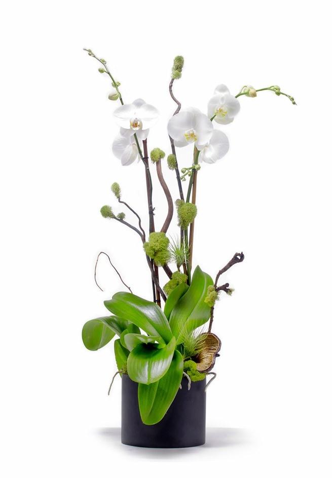 Image 1   IDEAS (orchid arrangements)   Pinterest   Orchids, Orchid on
