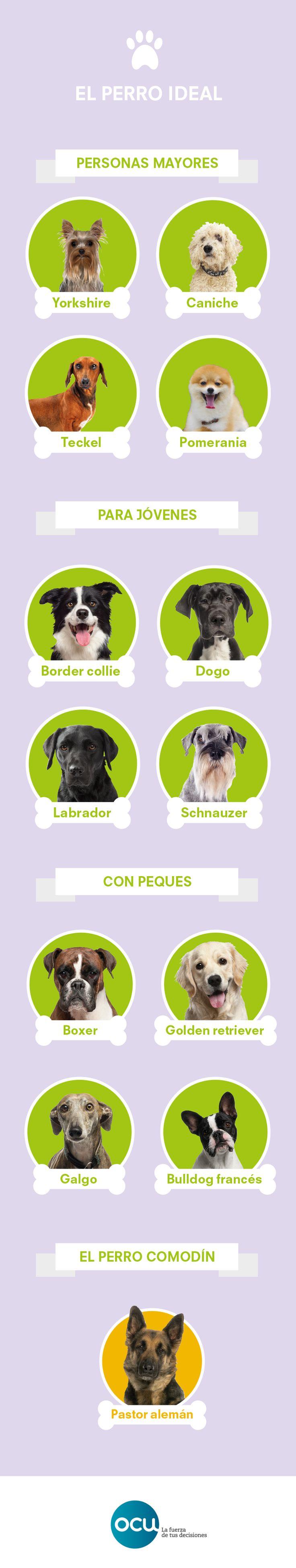 Cada etapa de la vida implica un grado de actividad y lo mismo pasa con cada tipo de perro. La armonía entre dueño y mascota es fundamental para que la convivencia sea sencilla.