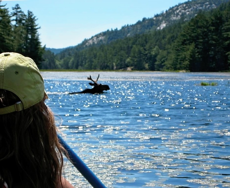 I've been out fishing in a boat on a lake in Northern Ontario while a moose swam near by.