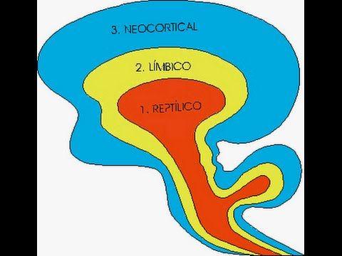 Neurociencias, Cerebro Reptiliano, Límbico y Neocortex - YouTube