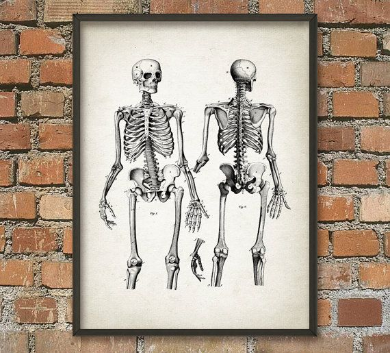 best 20+ human bone structure ideas on pinterest | structure of, Skeleton