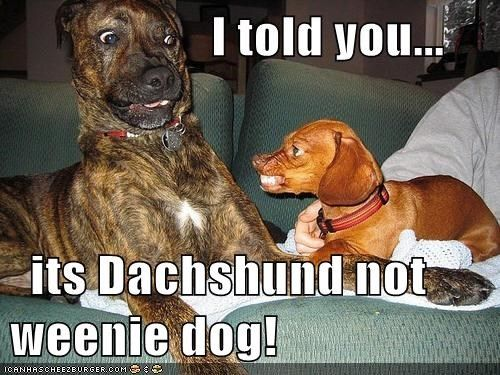 Missed You Funny Dachshund Memes   Funny Dachshund Meme