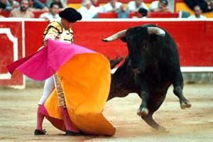 Must see - a bullfight in Madrid. You will have 1 of 2 reactions. Pure disgust for the sport or complete enthusiasm for all of the action! Either way, it's worth the ticket prices!