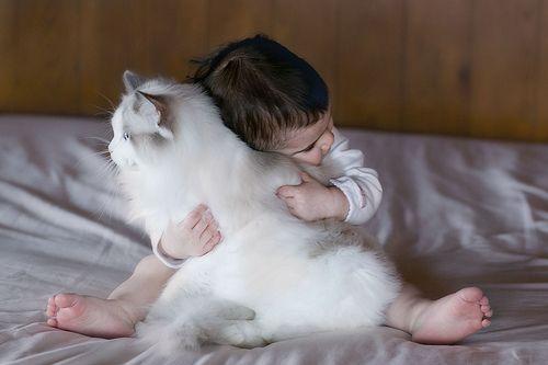 Ragdoll and baby...true love.