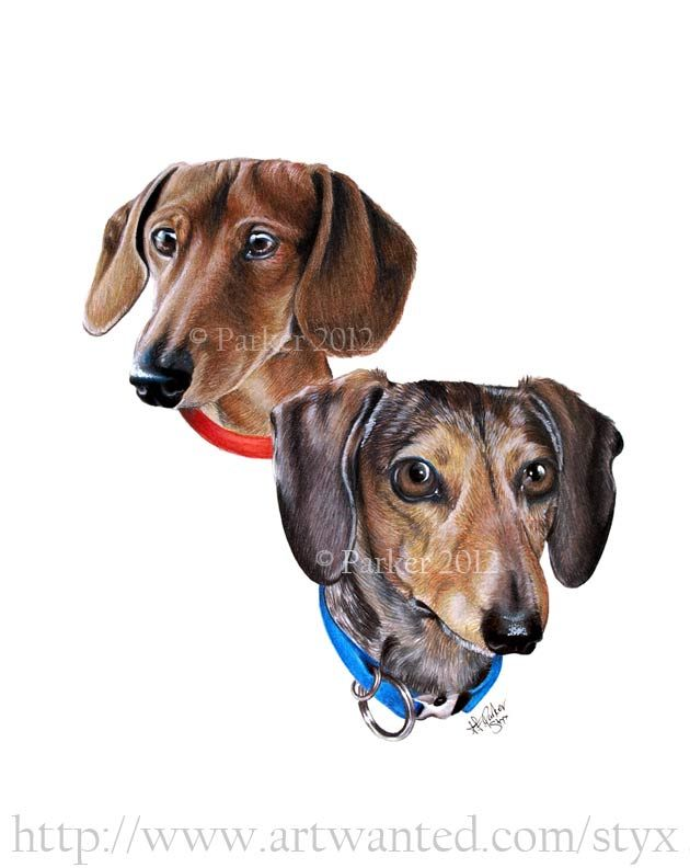 Colored pencil pet portrait commission of two dachshunds.