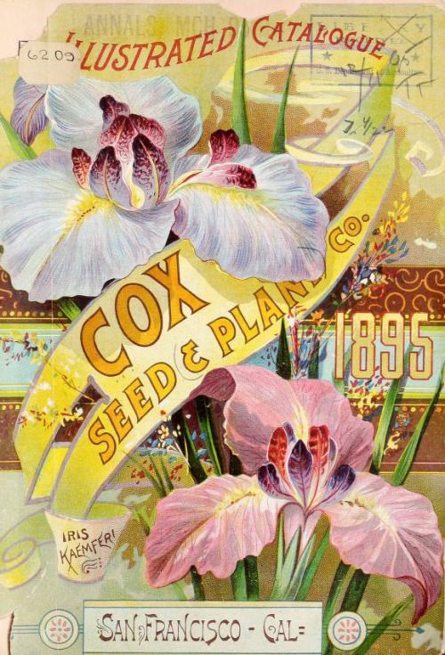 Front cover of Cox Seed & Plant Co 1895 Catalogue with an illustration of Iris Kaemferi. San Francisco, Cal. U.S. Department of Agriculture, National Agricultural Library. Biodiversity Heritage Library. archive.org