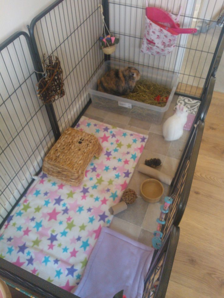 Neji + Luna's cage ~ Indoor rabbit set up