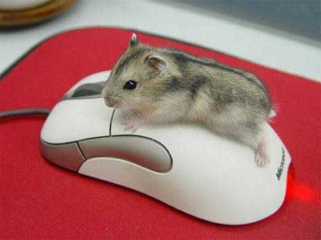 "* * "" A mouse ands a hammie. Ha - I makes me own joke. I knowz dis isn't a real mouse, but it helps to compare me size ( I be Russian Dwarf) to dis gadget."""