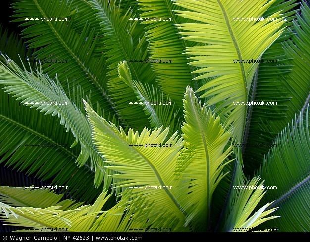 sago di foglie di palma