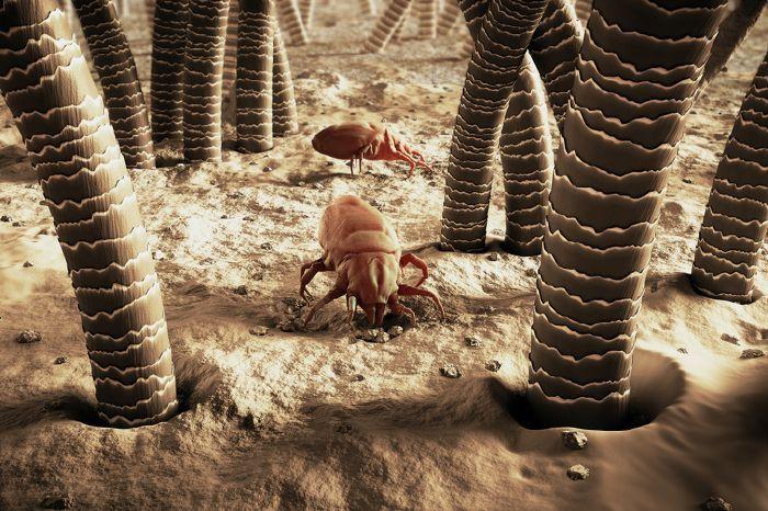 Hatékony védekezés a rovarok ellen – házi praktikákkal – … az otthon melege …