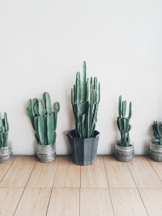 classy pictures of cactus house plants. Free Your Wild  Botanical Beauty Plants Cacti Garden Decor See more Untamed Nature 38 best Good Greenery Inspiration images on Pinterest Green