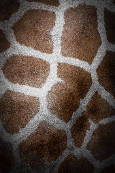 giraffe / repinned on toby designs