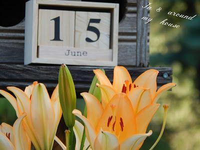 In & around my house : My summer !!!!!