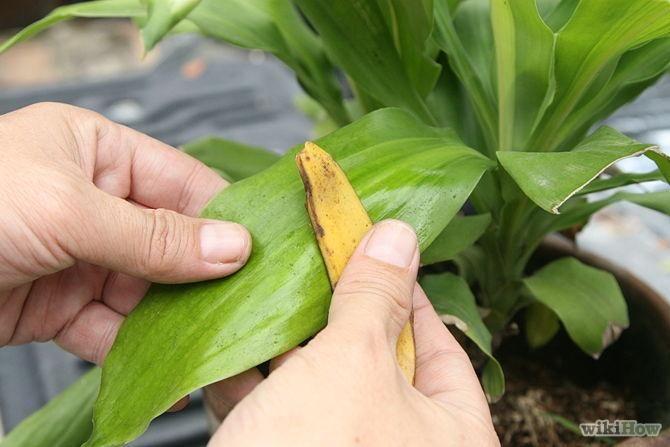 Por qué limpiar las hojas de nuestras plantas y cómo hacerlo de la mejor forma