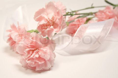 Bild von 'Soft pink carnations and white silky ribbon' on Colourbox