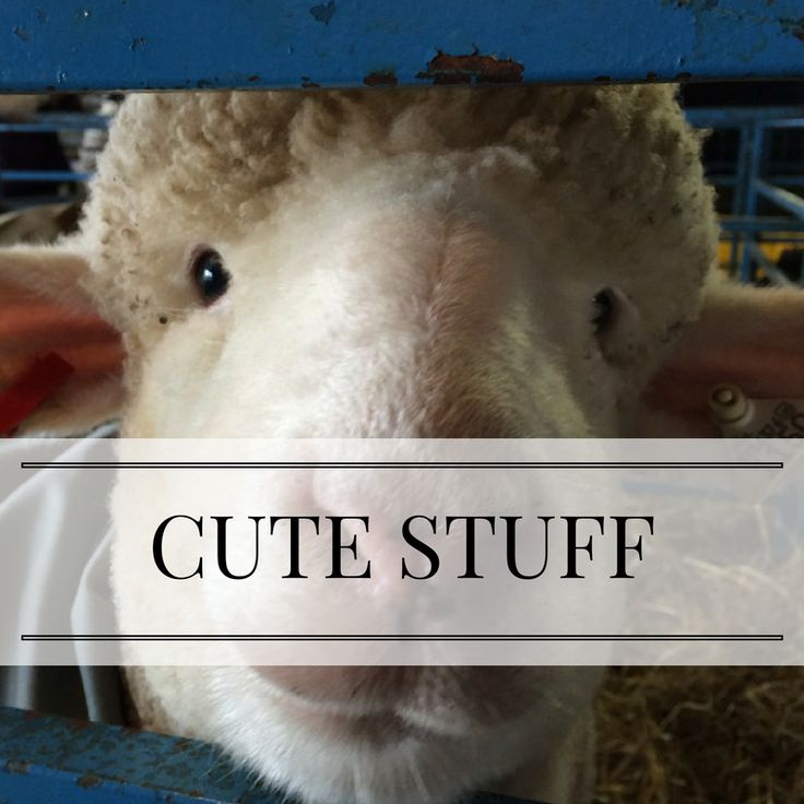 What knitter doesn't love some cute sheep, cats, animals-in-sweaters, and silly things? Follow my Instagram account (pattyjlyons) for more photos!