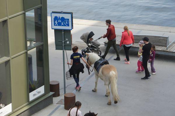 Sveriges framgångssaga - en uttalad frånvaro av populism