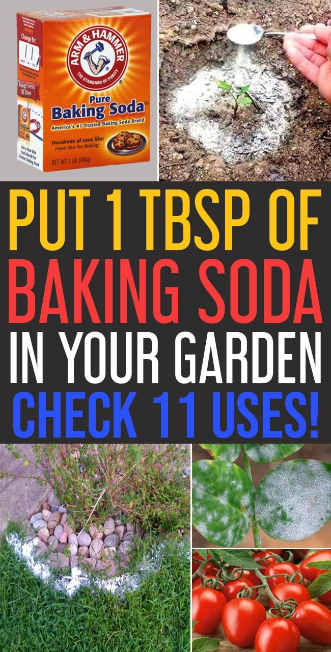 Spray Baking Soda In Your Garden And Check Its Uses The Foliage