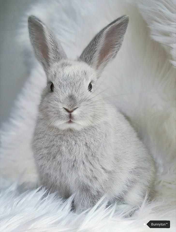 Photogenic bunny