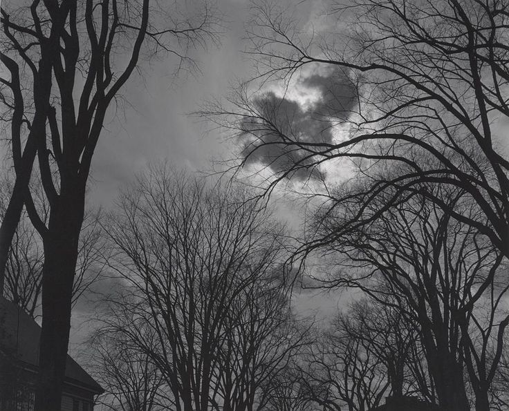 1950s Bare Trees and Clouds, Winter, Wiscasset, Maine [trees silhouetted against sky, sun behind small dark cloud; building's roofline visible at lower left] by Ansel Adams 85.122.40