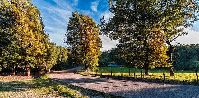 #landscape #oak #foloi #greece #forest #nature #Φολοη #Δρυοδασος_Φολόης