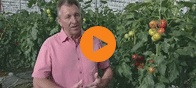 Jakes Nursery is a tomato farm in Sidlesham in Chichester. Since 2007 Jakes have been supplying Green Energy UK with electricity created solely as a by-product of their tomato growing process